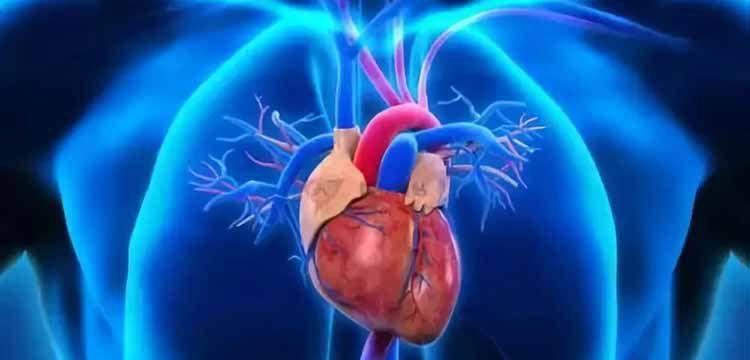 给忙碌者的心脏医学课-百度网盘-下载